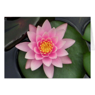 Lotus Blossom #1 Card