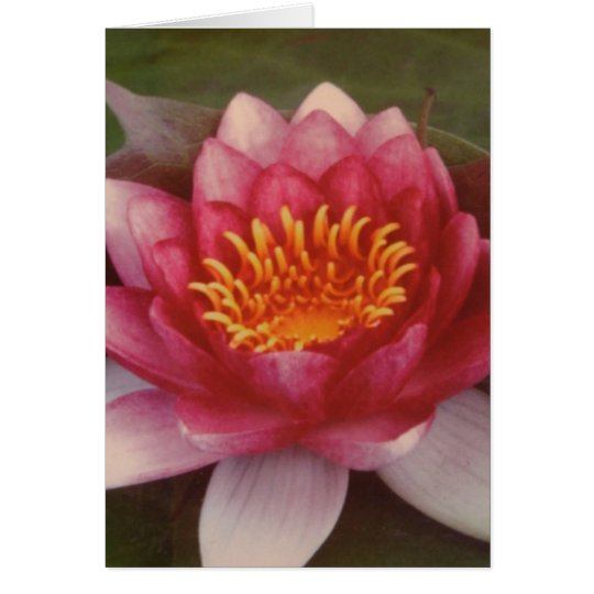 Lotus Blossom - By Logan Guinn Card