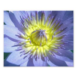 Lotus Close-up Photographic Print