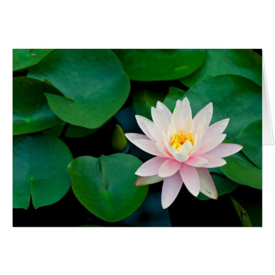Lotus Flower and Lily Pads Card
