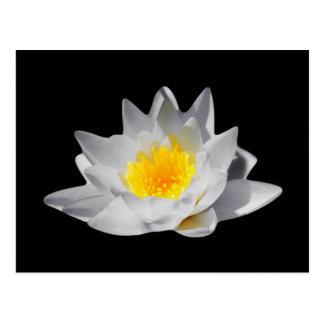 Lotus Flower (Black Background) Postcard