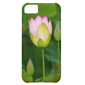 Lotus flower case