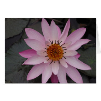 Lotus Flower Note Card
