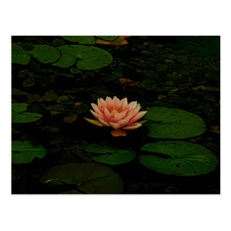 Lotus Flower Orange Dark Green Floral Pond Zen Postcard