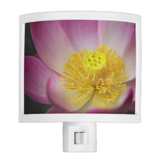 lotus flower petals nite light
