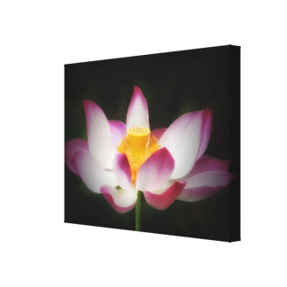 Lotus Flower Photography Great Yoga Om Gift! Stretched Canvas Print