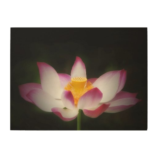 Lotus Flower Photography Great Yoga Om Gift! Wood Prints