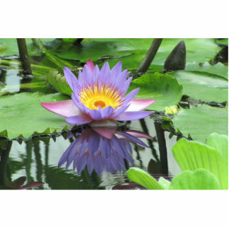 Lotus Flower Photo Cutout