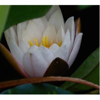 Lotus Flower Cut Out