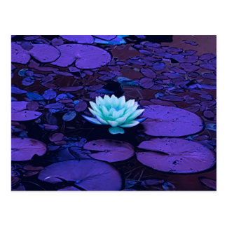 Lotus Flower Purple Blue Turquoise Floral Pond Zen Postcard