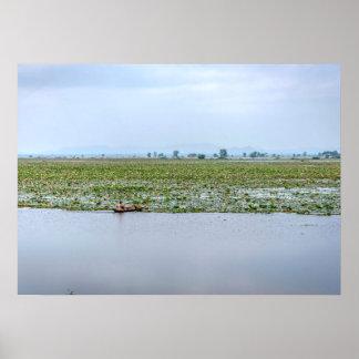 Lotus lake, Cambodia Poster