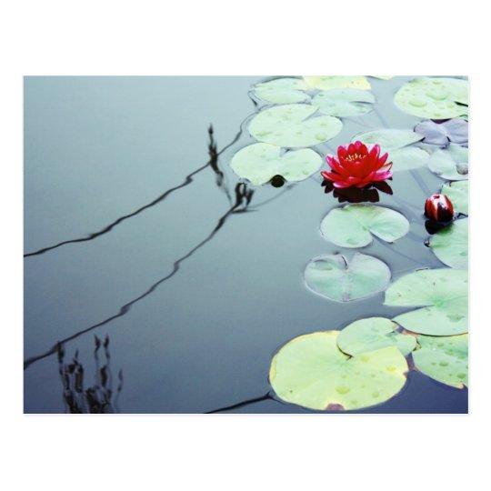 Lotus on Water Postcard
