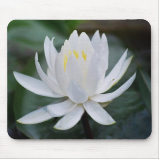 Lotus or waterlily and meaning mouse pad