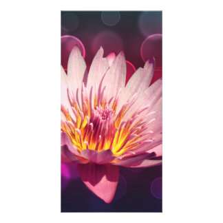 Lotus Picture Card