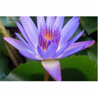 Lotus Cut Out