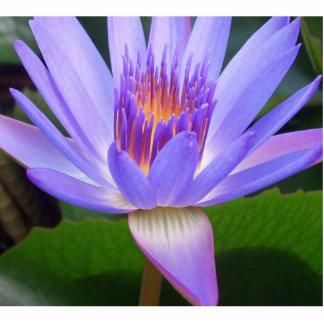 Lotus Photo Cutouts