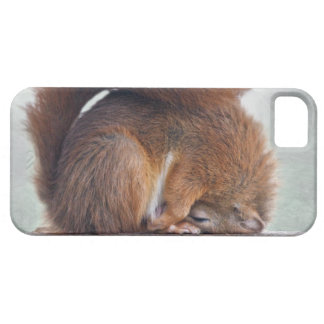 Lotus Squirrel iPhone 5 Case-Mate Case