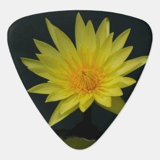 Lotus Waterlily Guitar Pick
