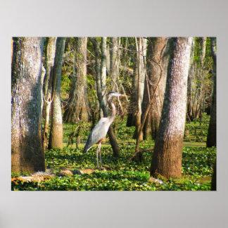 Louisiana Bird in Swamp Poster