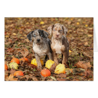 Louisiana Catahoula Puppies With Pumpkins Card
