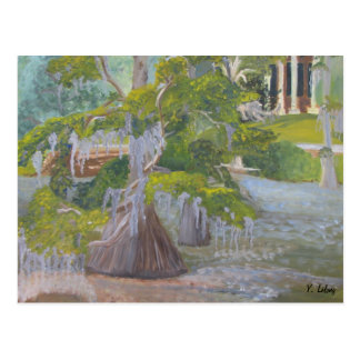 Louisiana Cypress Lake Postcard