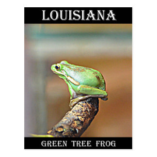 Louisiana Green Tree Frog Postcard