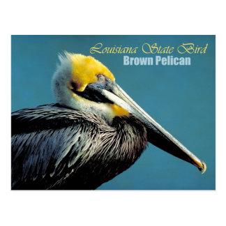 Louisiana State Bird - Brown Pelican Postcard