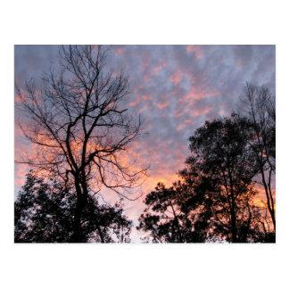 Louisiana Sunset Postcard