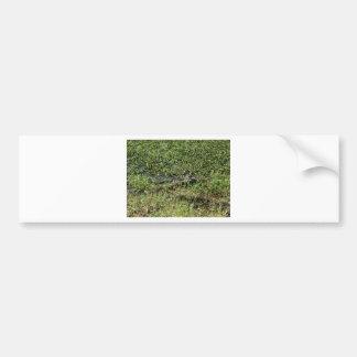 Louisiana Swamp Alligator in Jean Lafitte Bumper Sticker