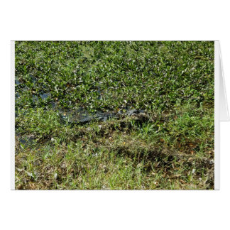 Louisiana Swamp Alligator in Jean Lafitte Card