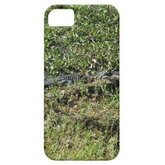 Louisiana Swamp Alligator in Jean Lafitte Case For The iPhone 5