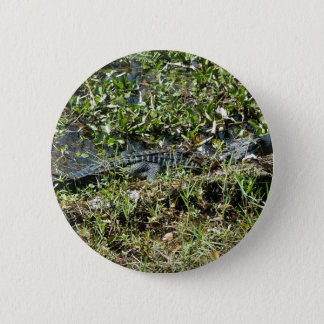 Louisiana Swamp Alligator in Jean Lafitte Close Up 2 Inch Round Button