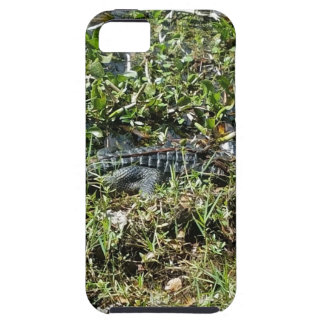 Louisiana Swamp Alligator in Jean Lafitte Close Up Case For The iPhone 5