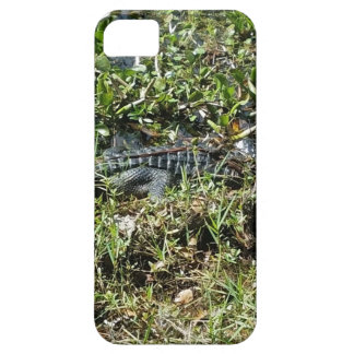 Louisiana Swamp Alligator in Jean Lafitte Close Up Case For The iPhone 5