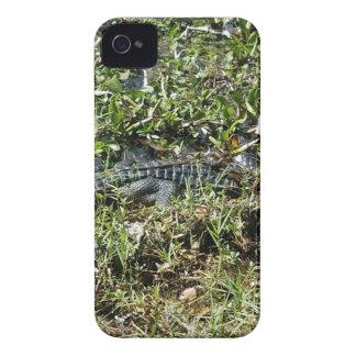 Louisiana Swamp Alligator in Jean Lafitte Close Up Case-Mate iPhone 4 Case