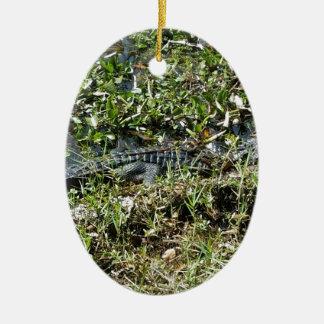 Louisiana Swamp Alligator in Jean Lafitte Close Up Ceramic Oval Ornament