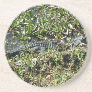 Louisiana Swamp Alligator in Jean Lafitte Close Up Coaster