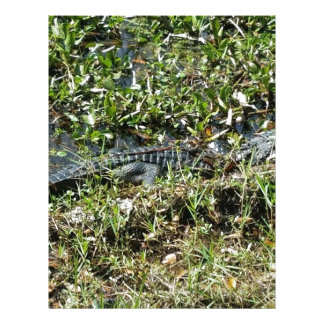 Louisiana Swamp Alligator in Jean Lafitte Close Up Letterhead