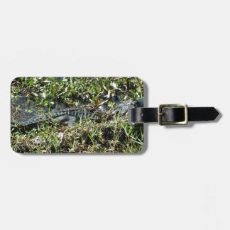 Louisiana Swamp Alligator in Jean Lafitte Close Up Luggage Tag