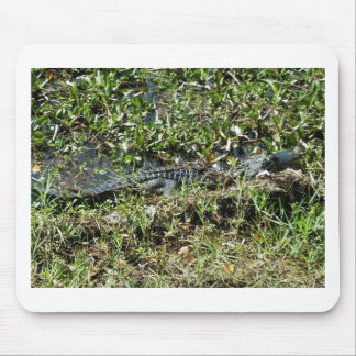 Louisiana Swamp Alligator in Jean Lafitte Close Up Mouse Pad