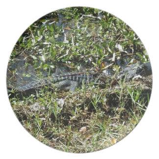 Louisiana Swamp Alligator in Jean Lafitte Close Up Plate