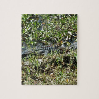 Louisiana Swamp Alligator in Jean Lafitte Close Up Puzzles