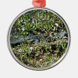 Louisiana Swamp Alligator in Jean Lafitte Close Up Silver-Colored Round Ornament