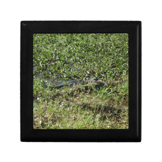 Louisiana Swamp Alligator in Jean Lafitte Gift Box