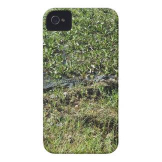 Louisiana Swamp Alligator in Jean Lafitte iPhone 4 Covers