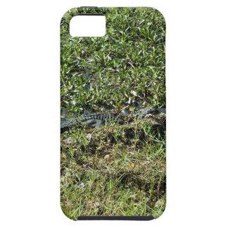Louisiana Swamp Alligator in Jean Lafitte iPhone 5 Cover