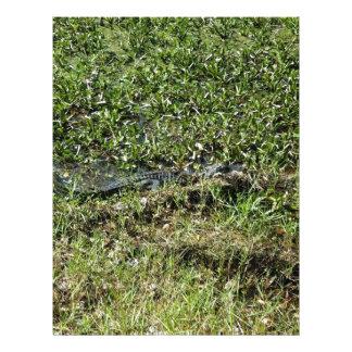 Louisiana Swamp Alligator in Jean Lafitte Letterhead