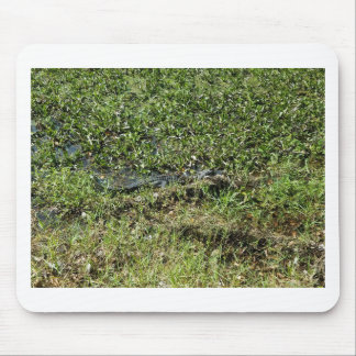 Louisiana Swamp Alligator in Jean Lafitte Mouse Pad