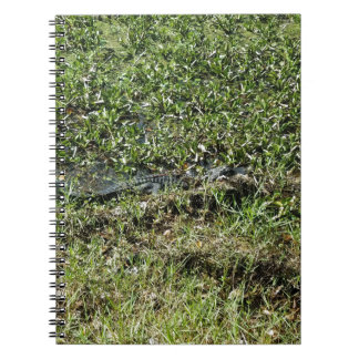 Louisiana Swamp Alligator in Jean Lafitte Notebook