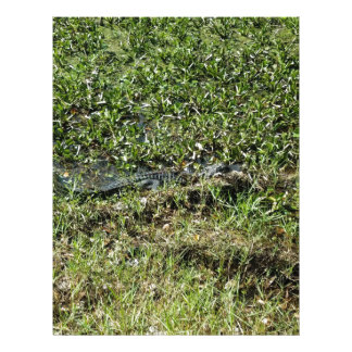 Louisiana Swamp Alligator in Jean Lafitte Personalized Letterhead